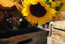 Sunflower love / Sunflowers are my fave!