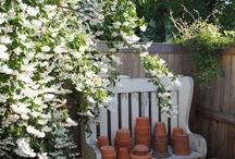 shrubs / by Nancy L.