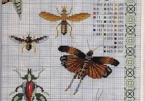 motyle owady