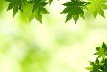 Cool Leafy Garden