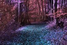 Природа лес