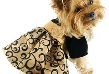 yorkie clothes / by Patti Roemer