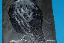 Obrazy na kamieniach / Na kamieniach malowane....