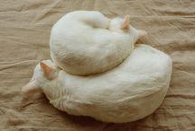 Mici Miao / Little balls of fur.