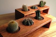 plants wood