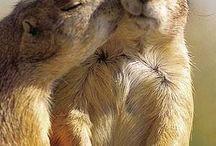animaux cute / des animaux cute