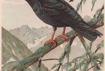 Birds / by Russian Soul Vintage