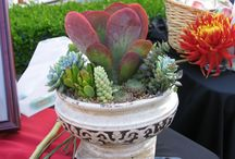 Succulent Dish Gardens / Ideas to share.