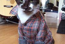 Catssss:333