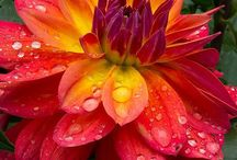 好きな色 花