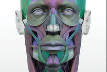 Face/Head