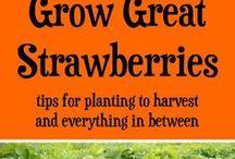 Strawberries/Mulberries/Blueberries