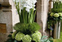 Blumen/Pflanzen