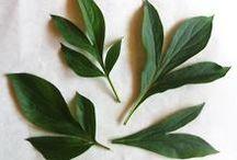 Рисунки листьев и лепестков с вырубками