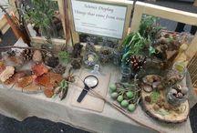 tree display science