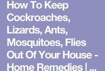 pesticides home made
