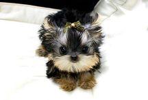 Much cuteness / by Amanda Southey