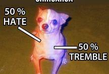 Chihuahua / by Alissa Poyner