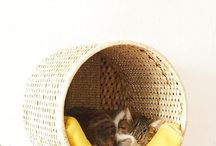 DIY cats