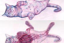 Anatomia (animales)
