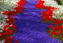Rosso bianco blu