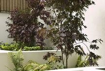 Garden ideas / by John Golding