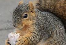 UMSI loves squirrels.