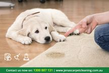 Carpet Cleaning Service in Melbourne / Everyone want to look our home carpet fresh, clean & neat. So Jena's Carpet Cleaning is the one of the best carpet cleaning service provider in Melbourne.