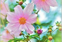 Wiesenblumen ist das herrliche leichte, es duftet alles nach Liebe