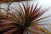 catrina s unusual plants