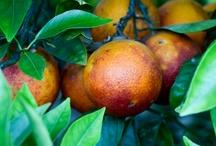 Orchard Abundance