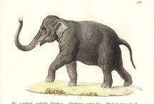 Inspiring Elephants