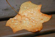 Herbst in Mainfranken / Herbstbilder