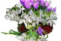 цветы для поздравлений