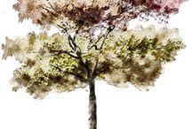 Trees Rendering