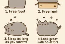 cat storys!!