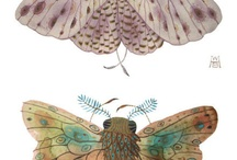 Art: Insects