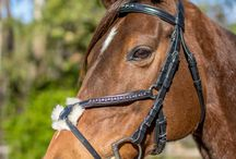 Bridles and brow bands / Horse tack. Bridles. Brow bands. Bling. Leather tack.