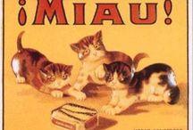 Chats (dans la pub)