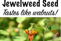 eat the weeds / knowing whst is safe to eat that grows wild