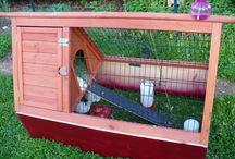 quail setup