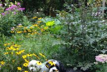 Good Gardens Home / Garden dogs on National dog day.