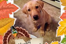 Happy Thanksgiving / These are holiday memes that we have created for our Facebook fans. If you would like a meme for the holidays of your loved ones, please like us on Facebook and post your photo. Happy Thanksgiving. =) / by AnimalBehaviorC