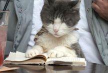 Animals & Books