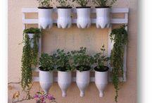 plantas potes