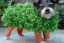 Pets and Halloween / Pets costumes and safety for a fun and safe holiday.