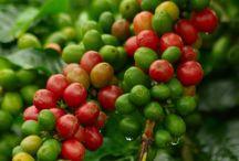 Growing Fruit and Vegetalbles