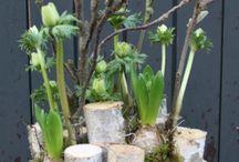 Bloemen planten