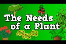 Kindergarten planting