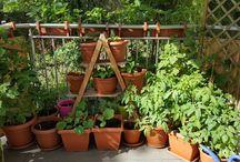 """My """"garden"""""""